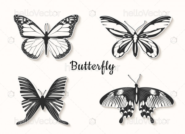 Butterfly line drawing - Vector Illustration